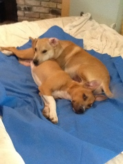 very cute snugglers...Hercules and Lucy