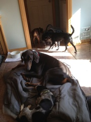 King enjoying his sleeping bag with a buddy