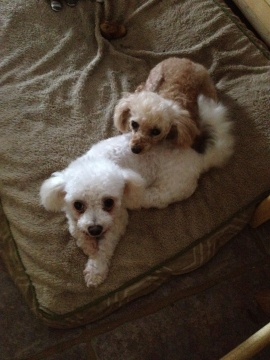 adorable bonded little duo...both special needs