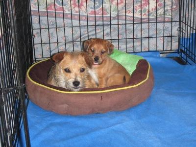 Pepper & Jude | Precious Souls Canine Rescue and Sanctuary